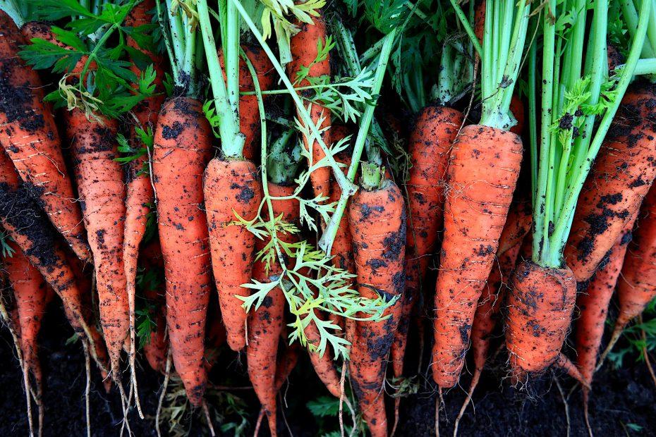 carrots-5474785_1920