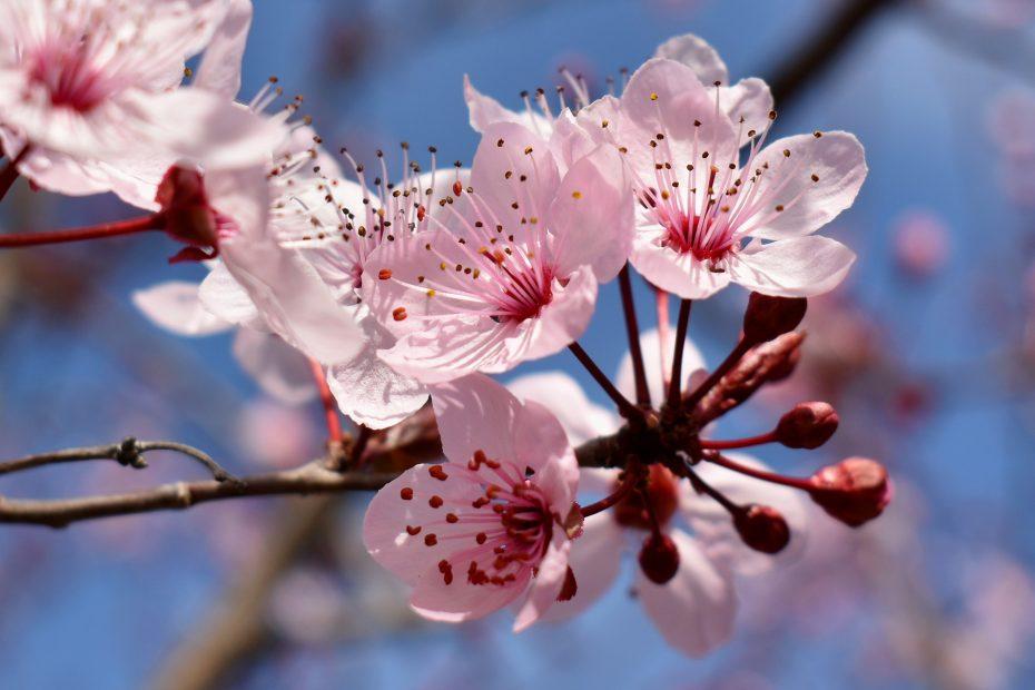 flower-4898286_1920