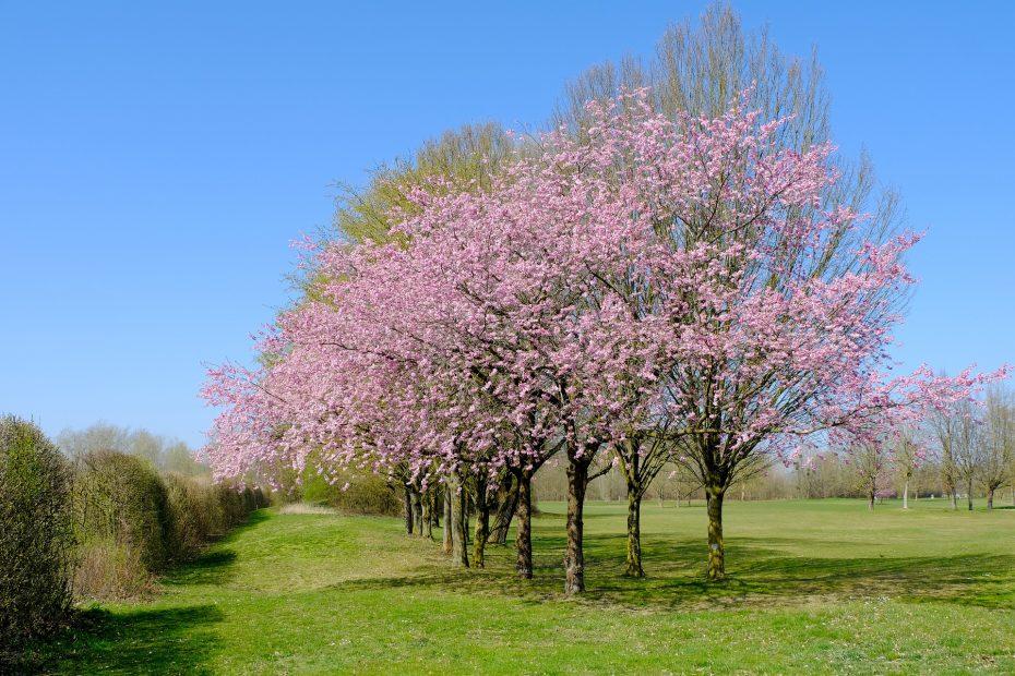 tree-4979661_1920